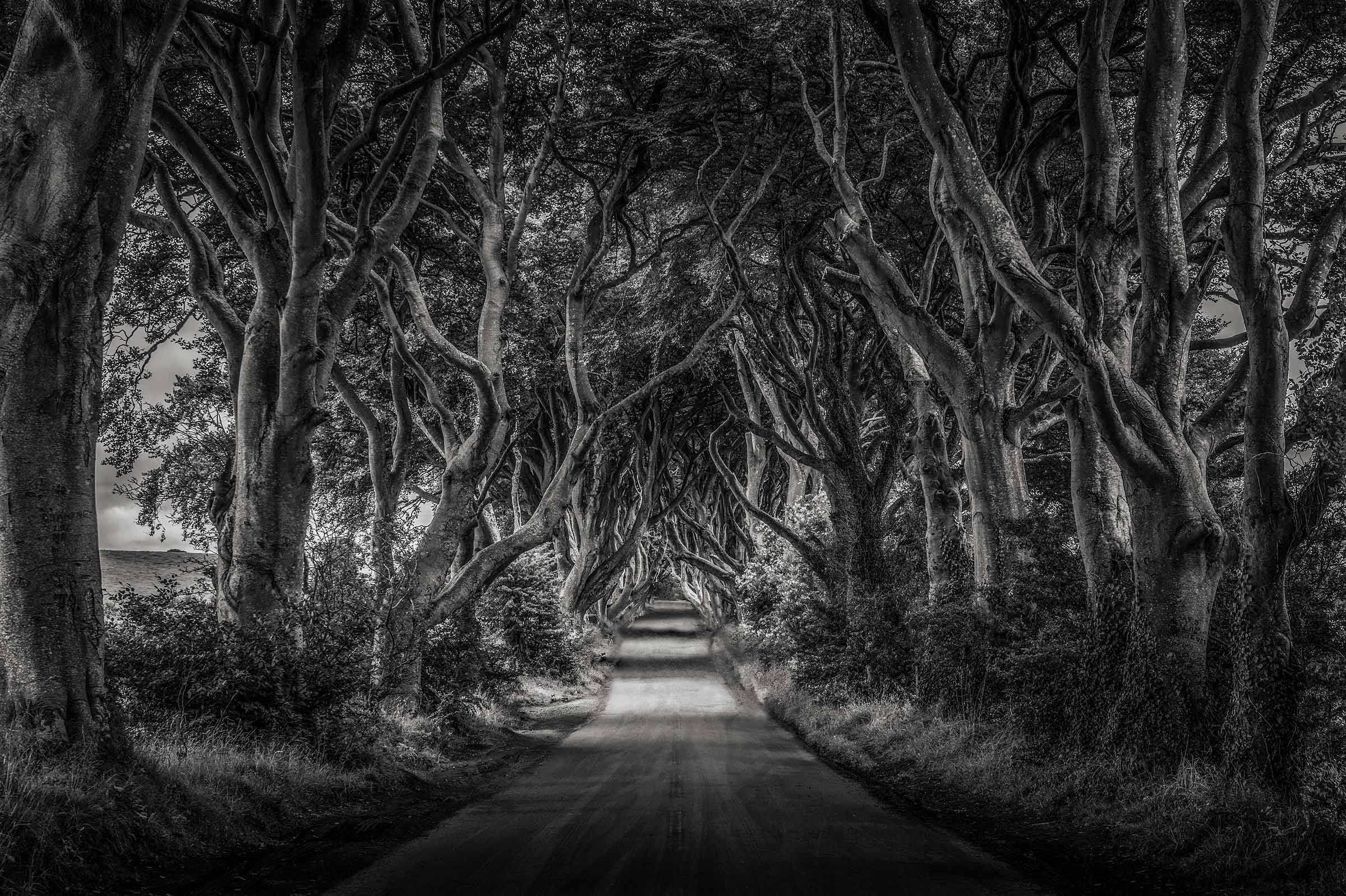 DarkHedges2_DSC6727